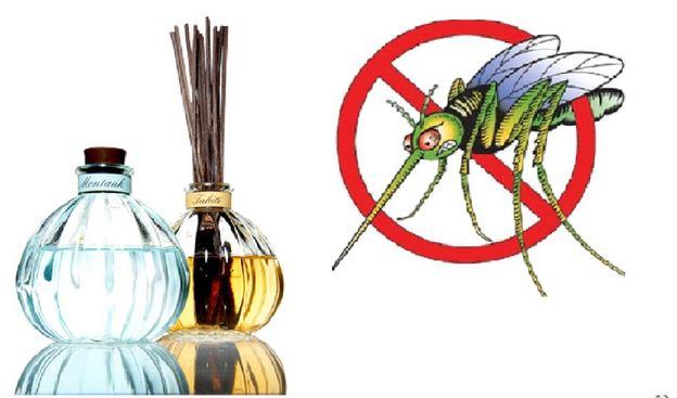 """Tinh dầuSả - """"khắc tinh"""" của muỗi"""