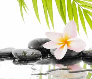 cách làm tinh dầu hoa sứ